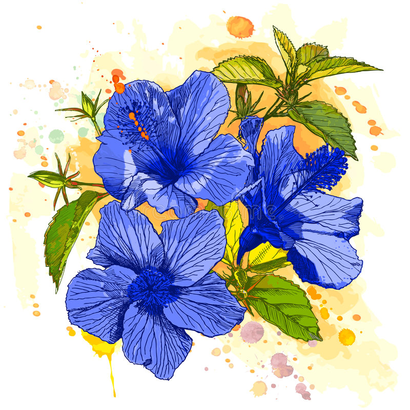 Aquarelllack - Hibiscusblume lizenzfreie abbildung