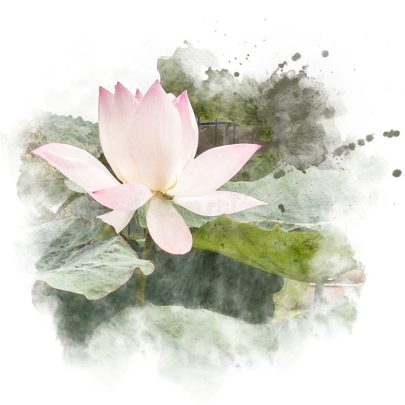 Aquarellmalerei überarbeiten Illustration von Blütenlotos lizenzfreie abbildung