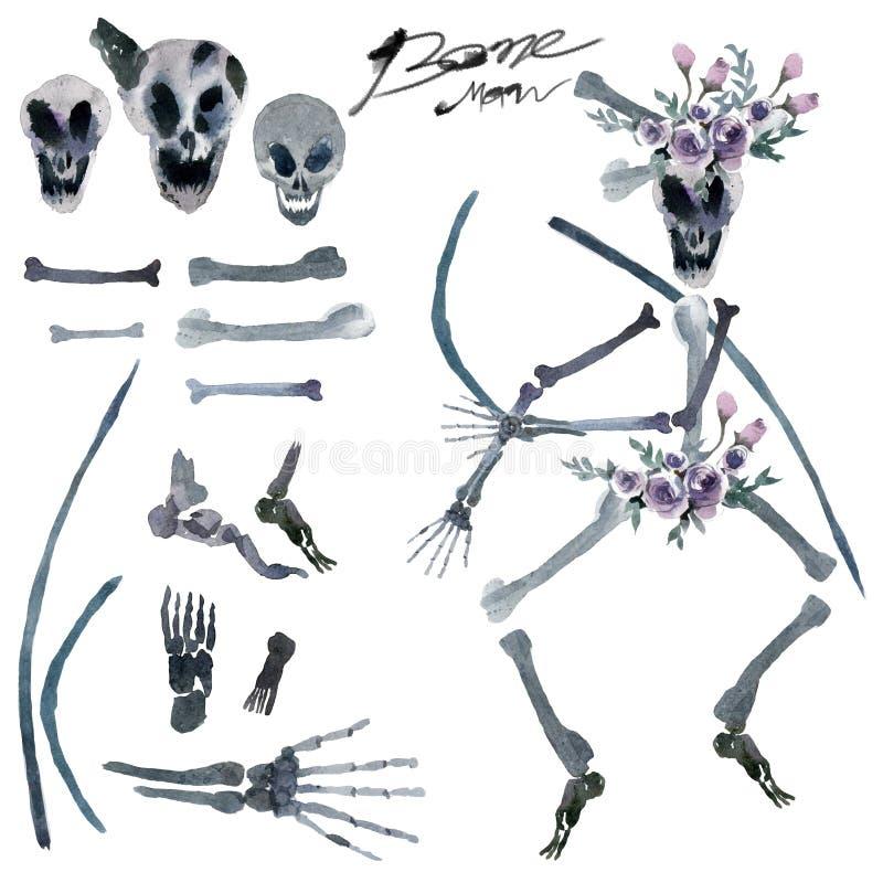 Aquarellmalerei in Stücke menschliche Knochen lizenzfreie abbildung
