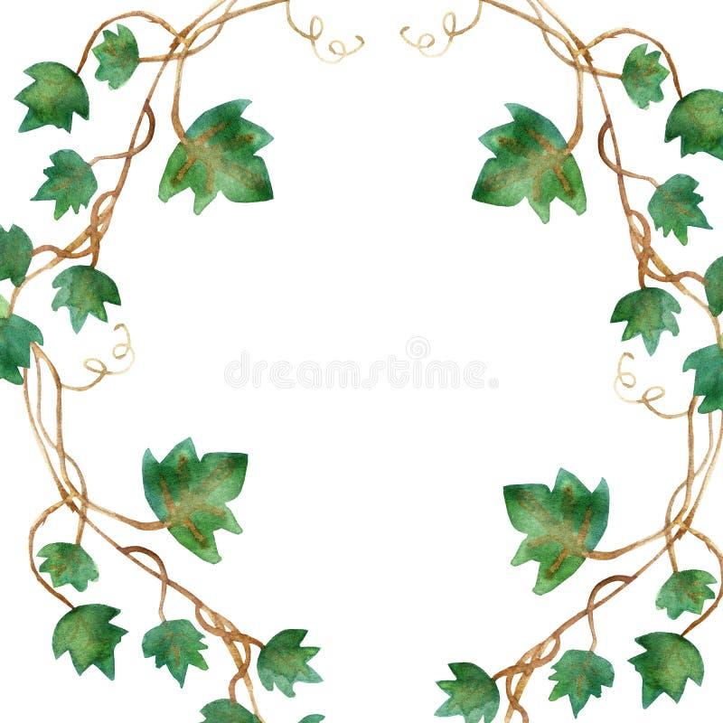 Aquarellmalerei von den grünen Efeublättern lokalisiert auf einem weißen Hintergrund Handgemalte Illustration des Aquarells Grüne stock abbildung