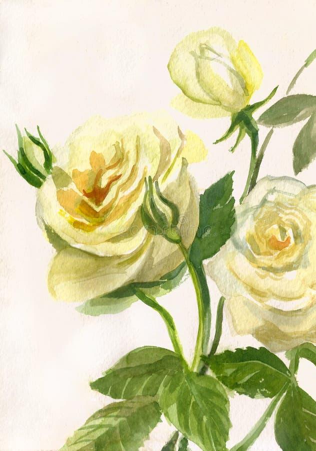 Aquarellmalerei von gelben Rosen vektor abbildung