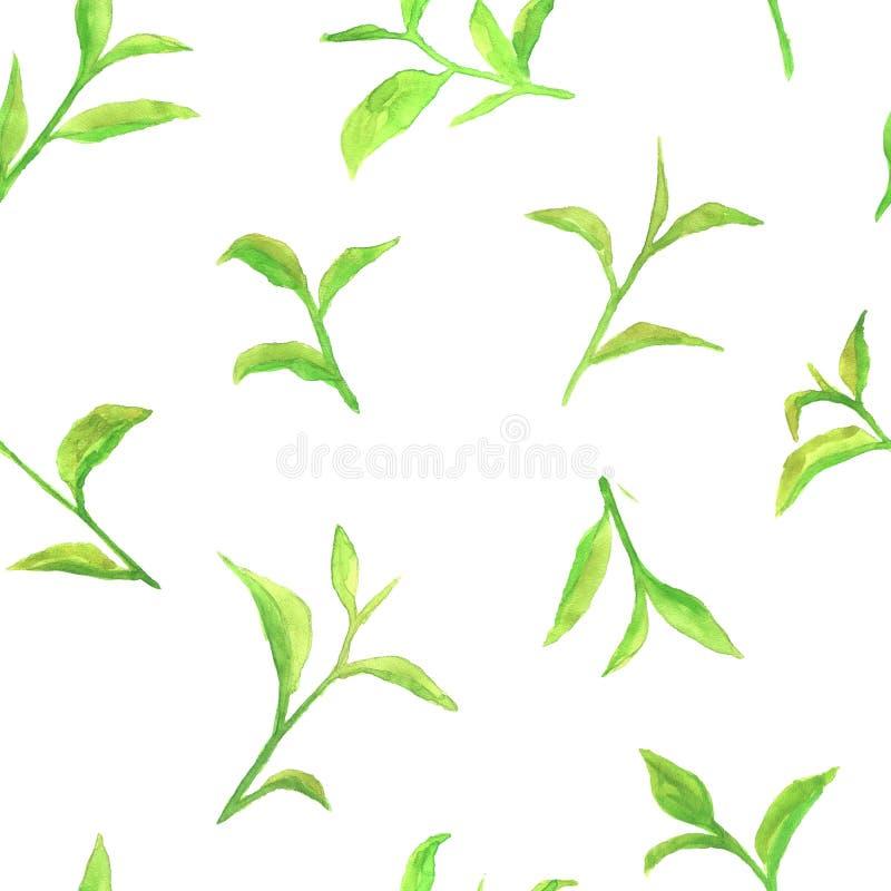 Aquarellmuster mit grünen Teeblättern lizenzfreie stockfotos