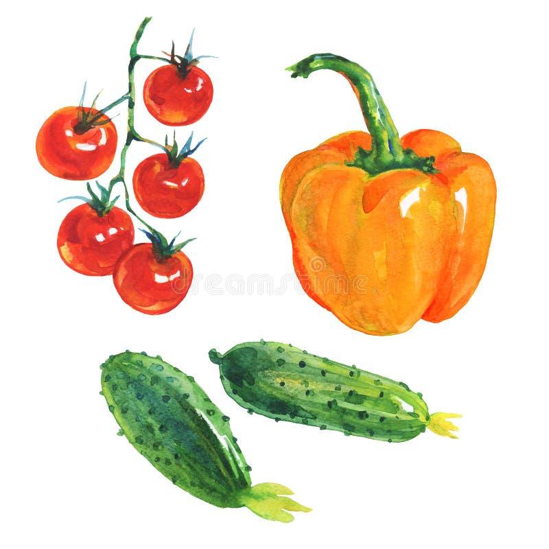 Aquarellpaprika, Gurken, Tomaten stock abbildung