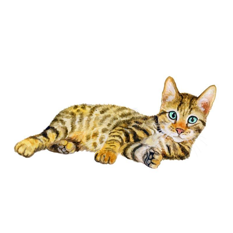 Aquarellporträt von serengeti Katze mit Punkten, Streifen auf weißem Hintergrund Hand gezeichnetes ausführliches süßes Haupthaust lizenzfreie stockbilder