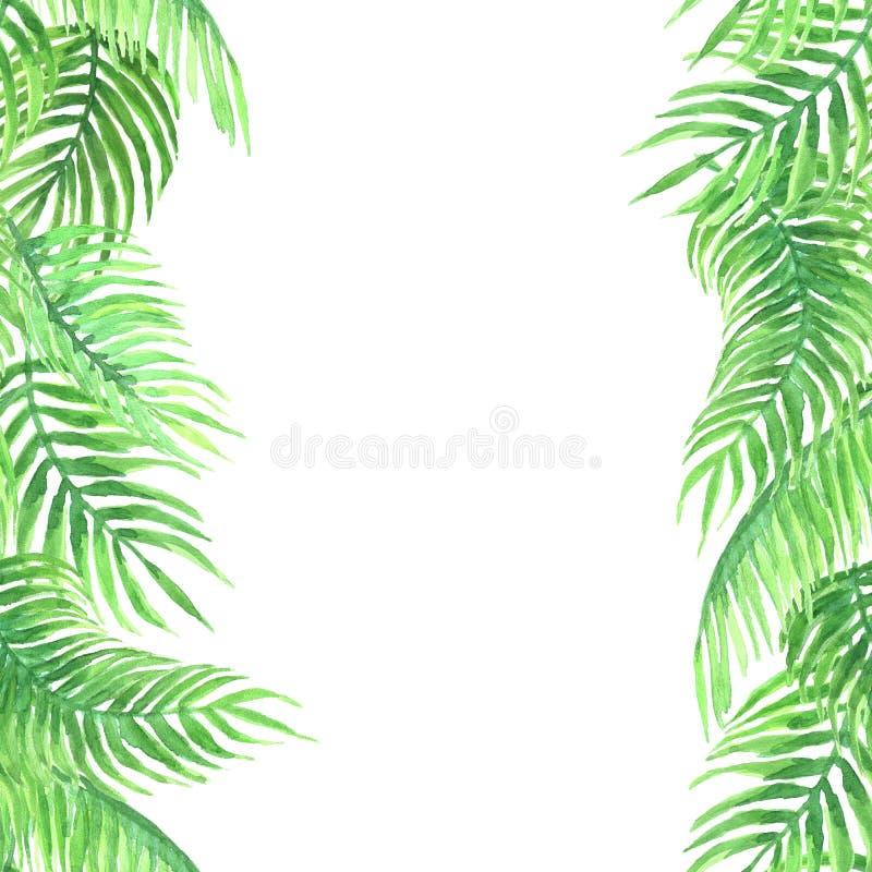 Aquarellrahmen von acai Palme stockbild