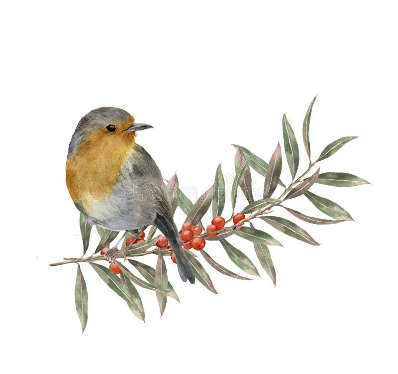 Aquarellrotkehlchen, das auf Baumast mit Rot- und Gelbblättern, Beeren sitzt Herbstillustration mit Vogel und Fall lizenzfreie abbildung