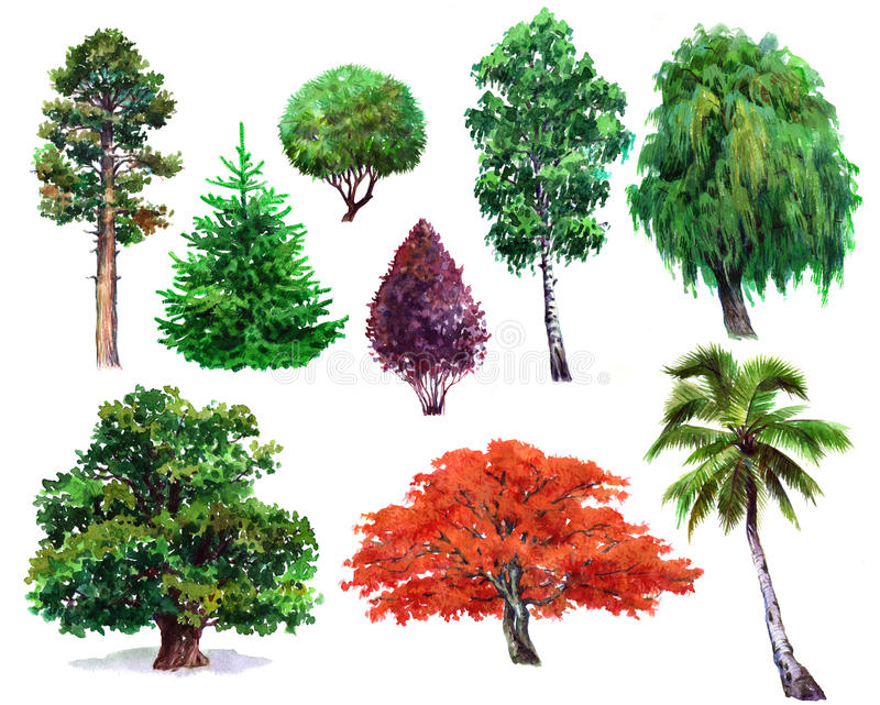 Aquarellsatz der Betriebseiche, Busch, japanischer Ahorn, Weide, Palme, Fichte, Kiefer, lokalisiert vektor abbildung