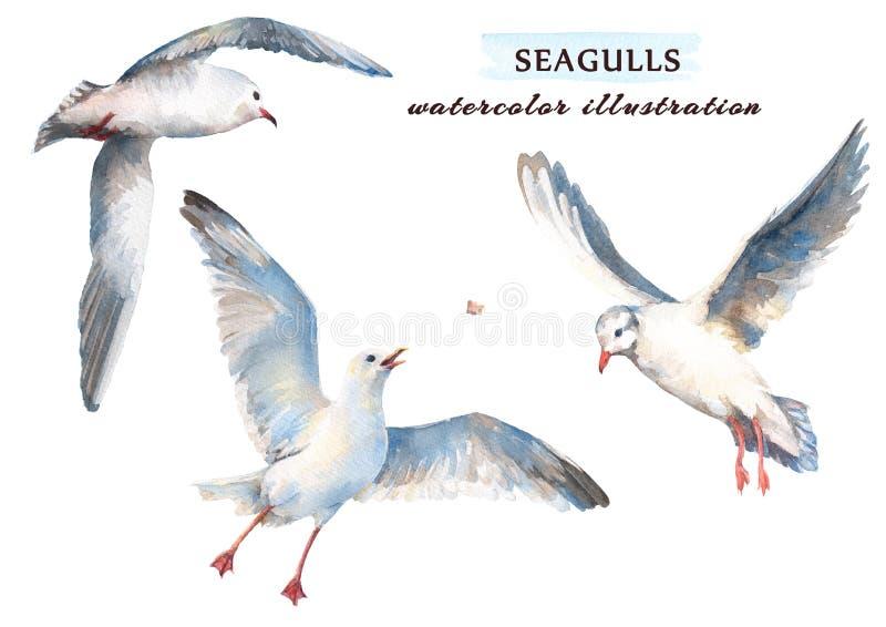 Aquarellsatz schöne Seemöwen in den verschiedenen Positionen lizenzfreie abbildung