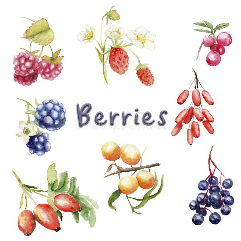 Aquarellsatz wilde Beeren: Erdbeere, Brombeere, greenberry, Hagebutte, Himbeere, Berberitzenbeere stock abbildung