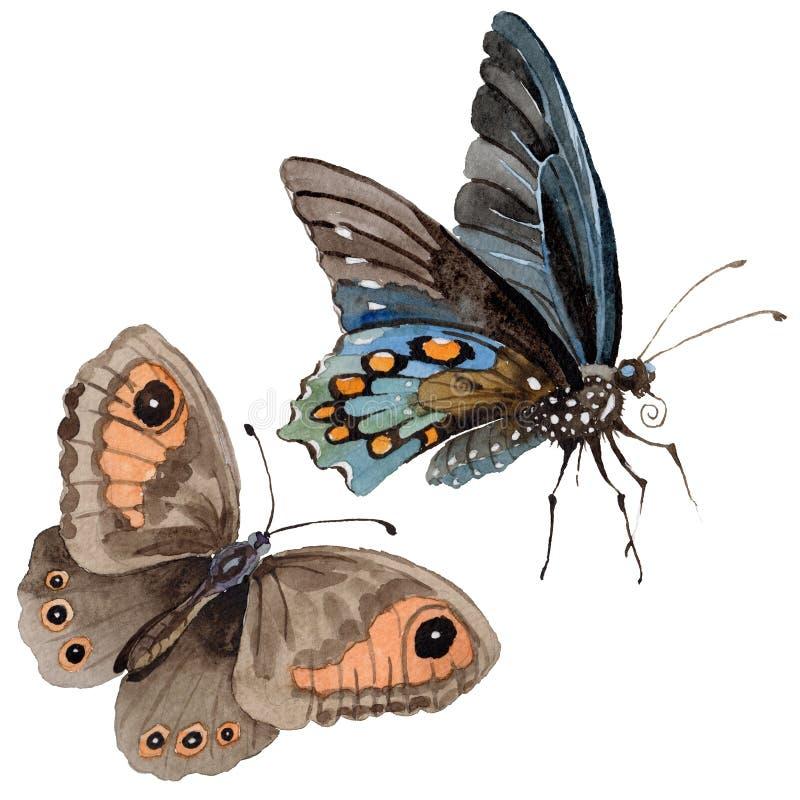 Aquarellschmetterlings-Angebotinsekt, intresting Motte, lokalisierte Flügelillustration vektor abbildung