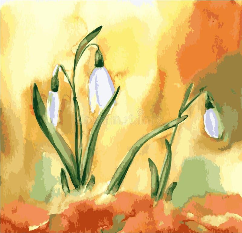 Aquarellschneegl?ckchenblumen Frühlingsvektorbild mit weißer Blume stock abbildung