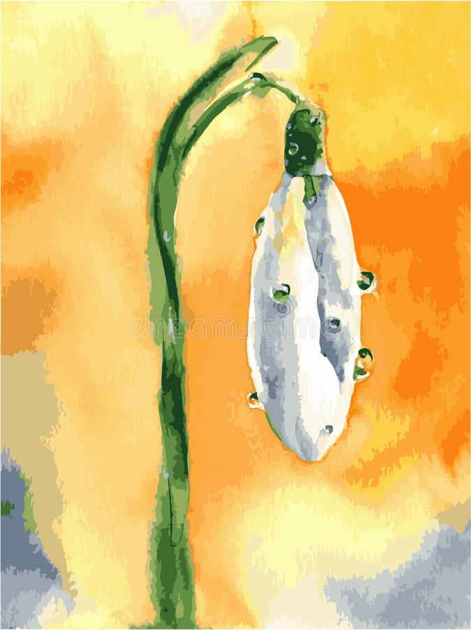 Aquarellschneegl?ckchenblumen Fr?hlingsvektorbild mit wei?er Blume vektor abbildung