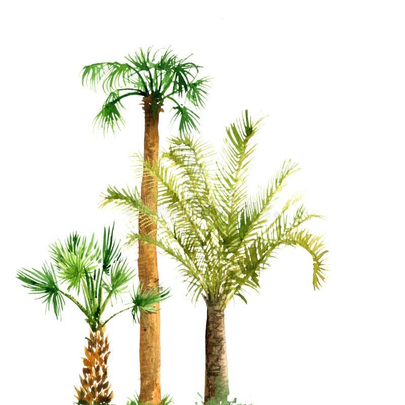 Aquarellskizze von Palmen stockbilder