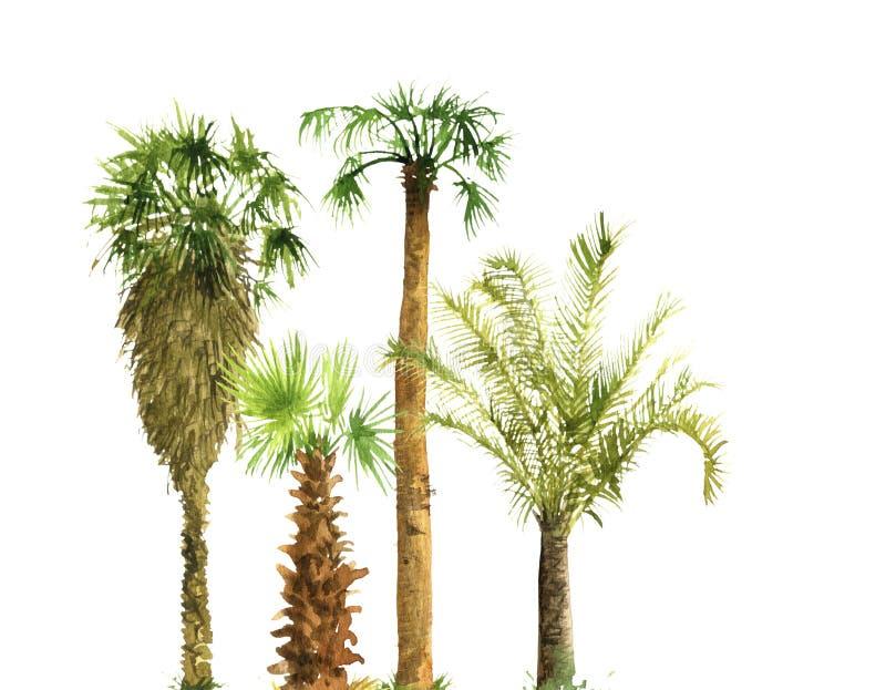 Aquarellskizze von Palmen stockfotografie
