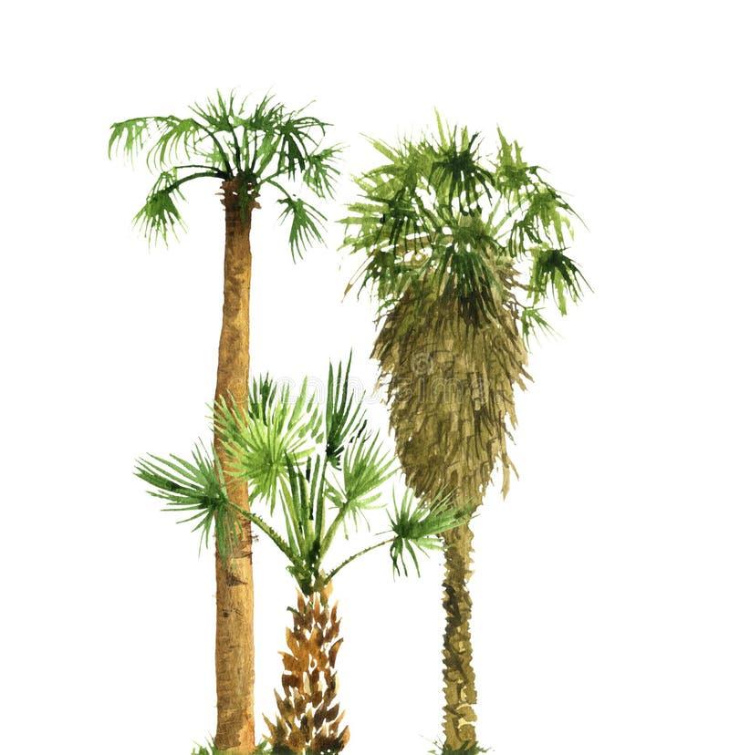 Aquarellskizze von Palmen lizenzfreies stockbild
