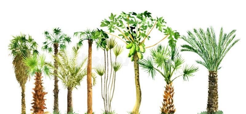 Aquarellskizze von Palmen lizenzfreie stockfotos