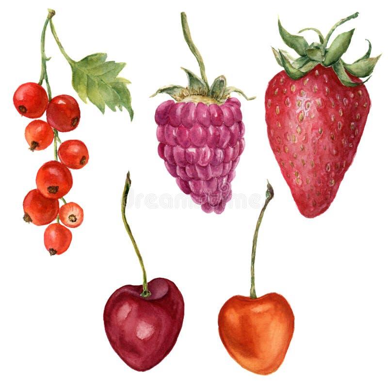 Aquarellsommer-Beerensatz Handgemalte Erdbeere, Himbeere, Kirsche und rote Johannisbeere lokalisiert auf weißem Hintergrund stock abbildung