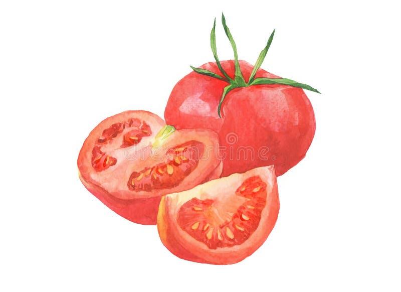 Aquarelltomaten und geschnittenes Tomatengem?se lokalisiert stockfoto