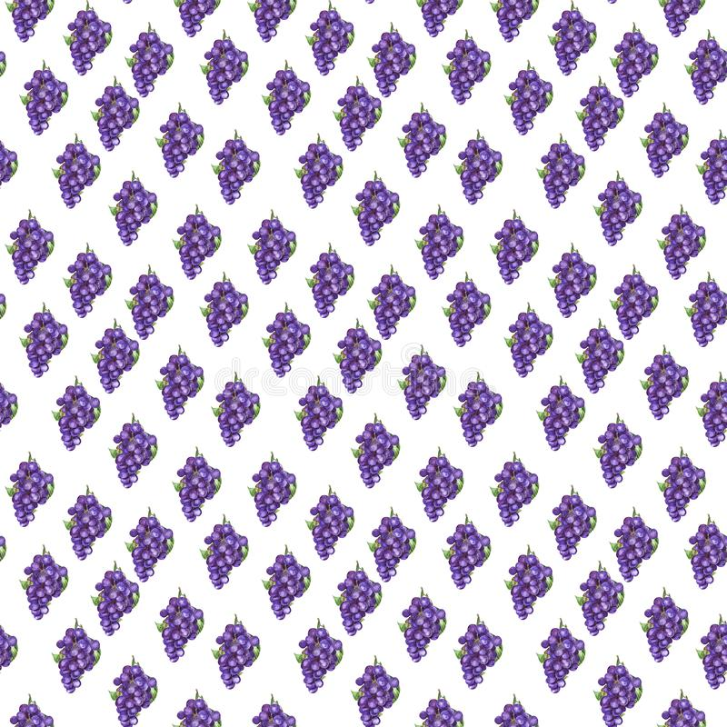 Aquarelltrauben nahtloses Muster, purpurrote Geschenke des Herbstes vektor abbildung