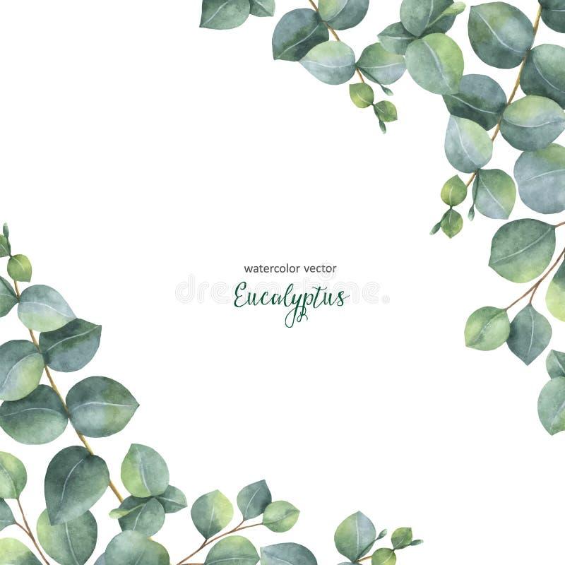 Aquarellvektor-Grün-Blumenkarte mit Eukalyptus des silbernen Dollars verlässt und verzweigt sich auf weißen Hintergrund stock abbildung