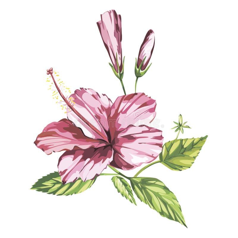 Aquarellvektor lokalisierte Illustration eines rosa Hibiscus, tropische Blumenzusammensetzung auf einem weißen Hintergrund ENV 10 stock abbildung