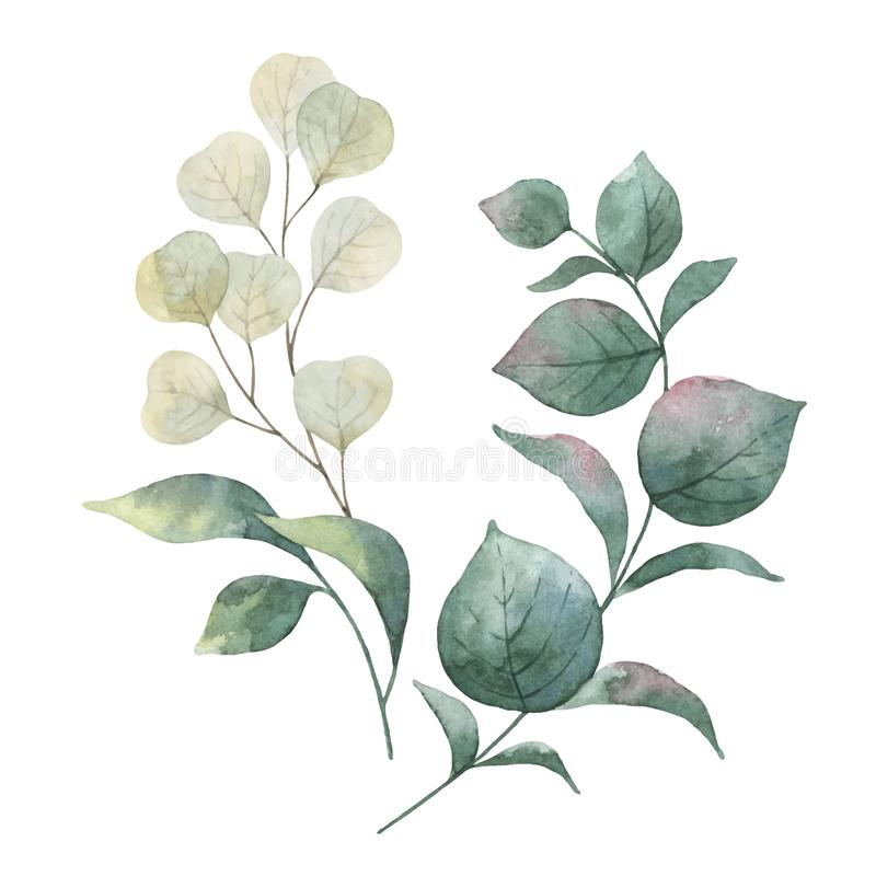 Aquarellvektorkranz mit grünen Eukalyptusblättern stock abbildung