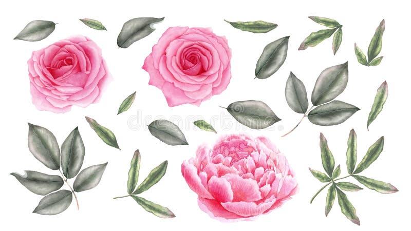 Aquarellweinleserosa stieg, Pfingstrosenblumen und Blätter lizenzfreie abbildung