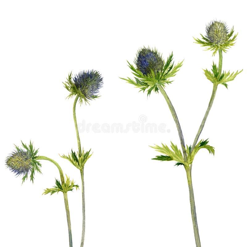 Aquarellwild wachsende pflanzen vektor abbildung