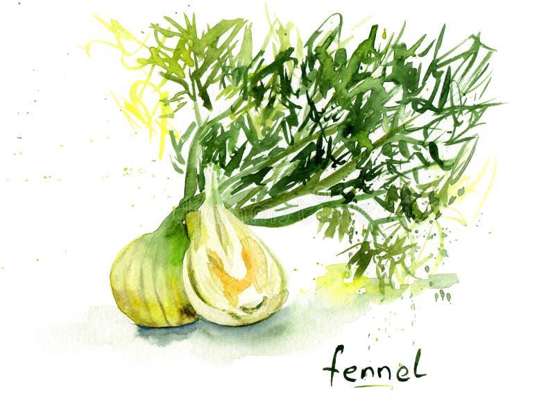 Aquarellzeichnung des Gemüses Fenchel mit Blättern vektor abbildung