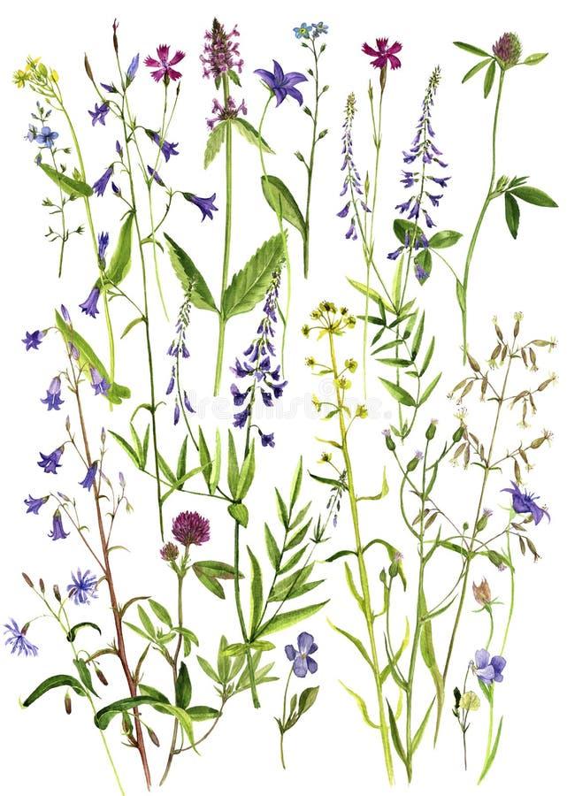Aquarellzeichnungsblumen und -anlagen vektor abbildung