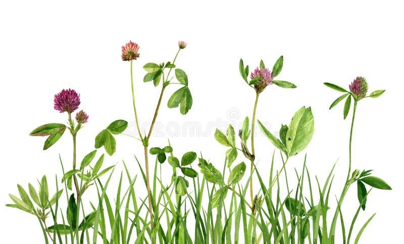 Aquarellzeichnungsblumen und -gras lizenzfreie abbildung
