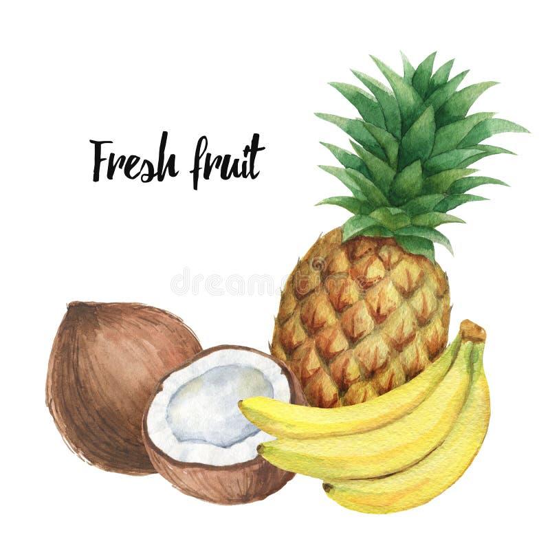 Aquarellzusammensetzung mit tropischen Früchten Banane, Ananas und Kokosnuss lokalisiert auf weißem Hintergrund stock abbildung