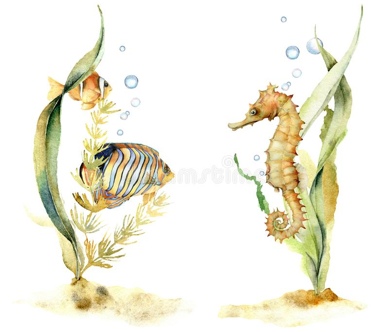 Aquarellzusammensetzungen mit tropischen Fischen und Seahorse Handgemalte Unterwasserblumenillustration mit Algen und vektor abbildung