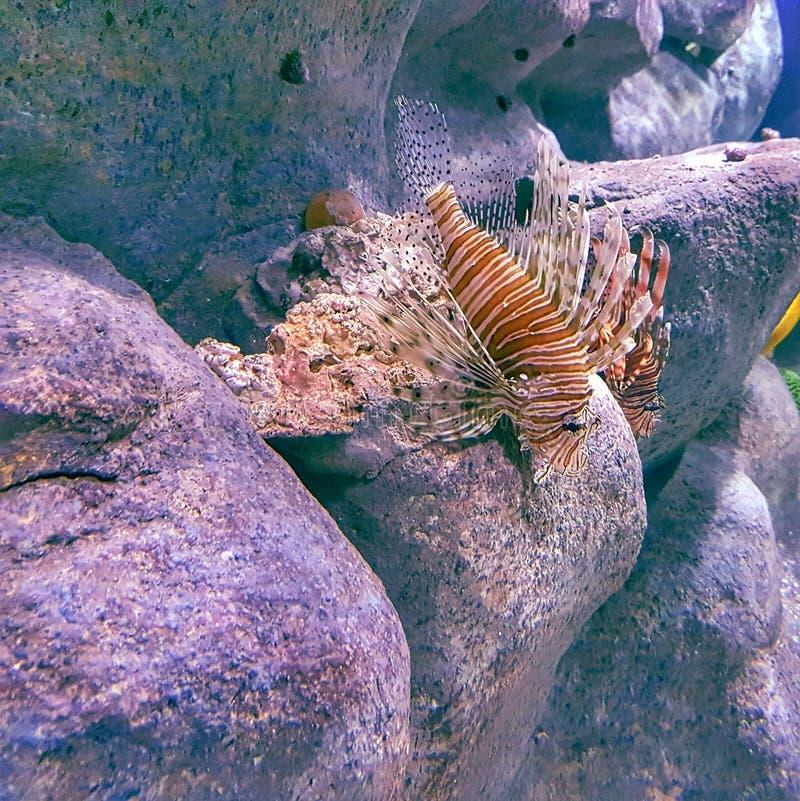 Aquario mars de peixe de mars photographie stock libre de droits
