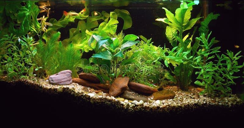 Aquarium à la maison