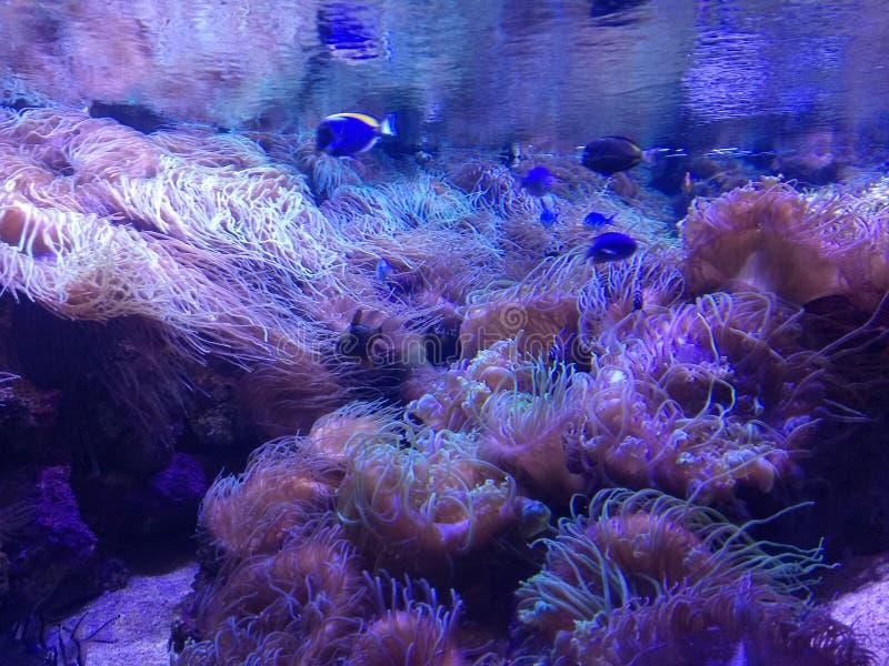Aquarium royalty-vrije stock afbeelding