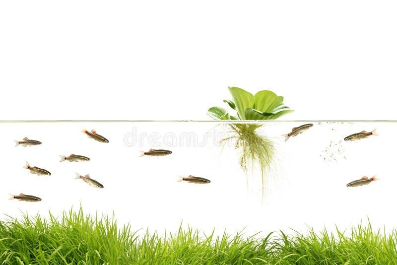 Aquarium lizenzfreies stockfoto