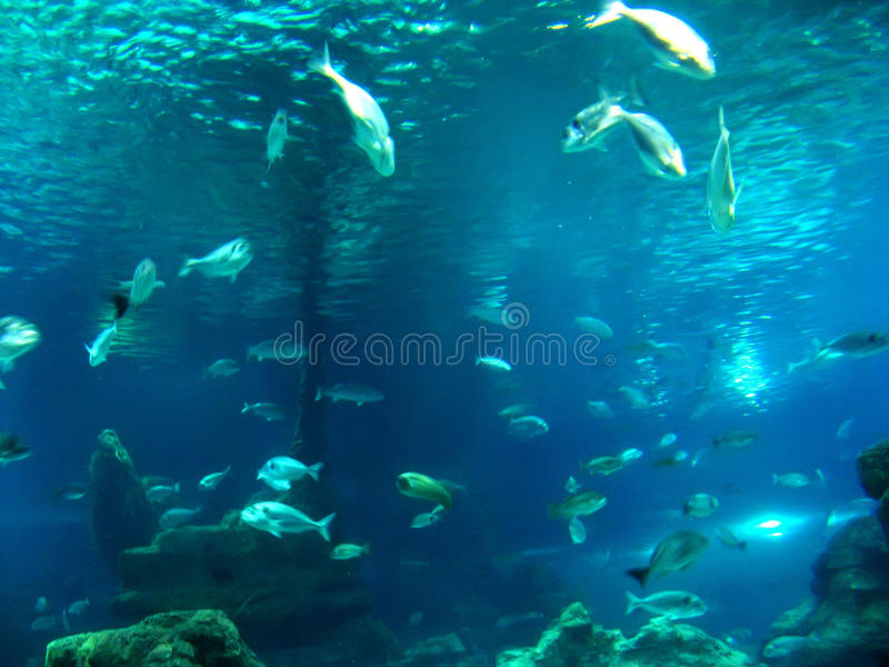 Aquarium images libres de droits