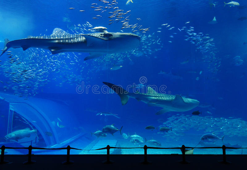 Aquarium royalty free stock photos