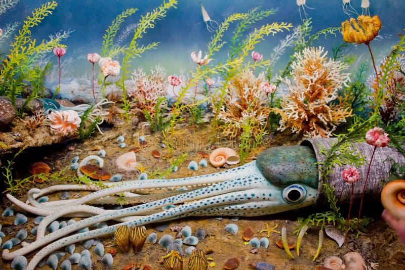 Download Aquarium. stock photo. Image of aquarium, marine, backgrounds - 19751494