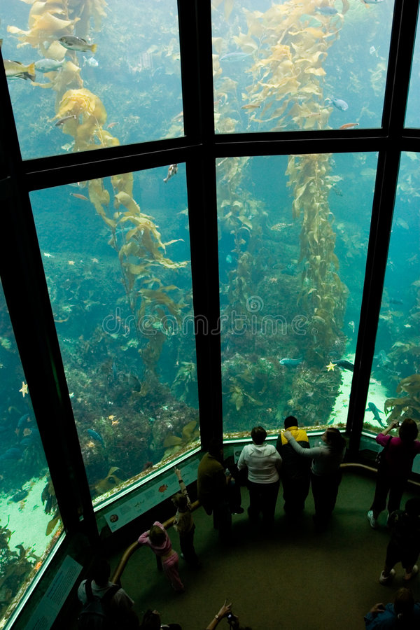 Download Aquarium 2 photo stock. Image du monterey, amusement, océan - 729614
