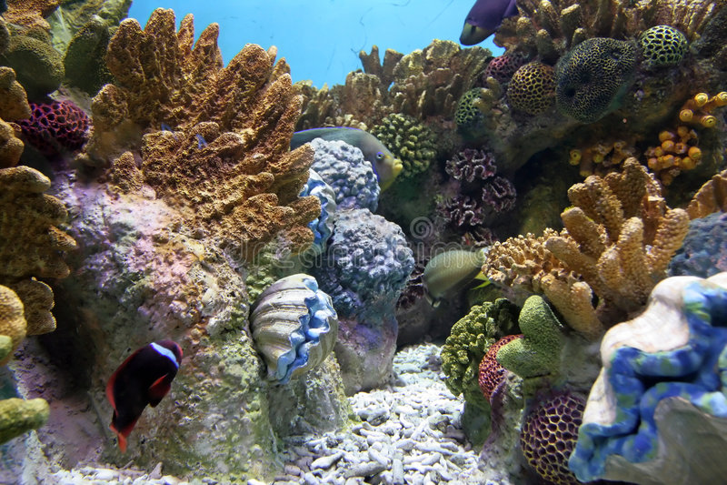 Aquarium 2 stock afbeelding
