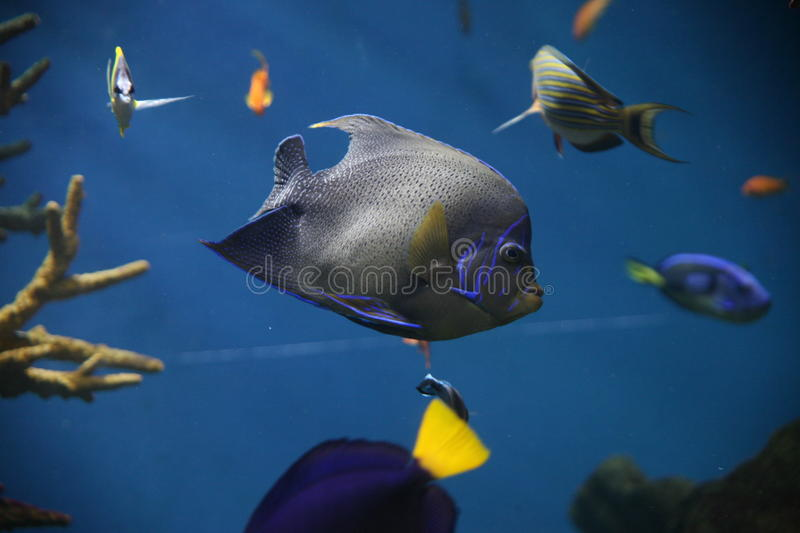 Aquarium photo stock