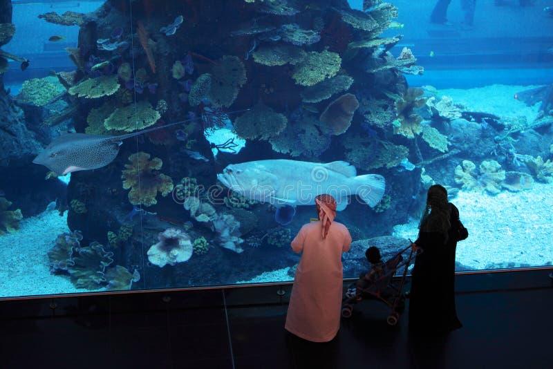 фото аквариум бурчи араб представитель фотостудии
