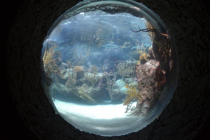 Download Aquarium stock image. Image of attraction, xcaret, displayed - 26177055