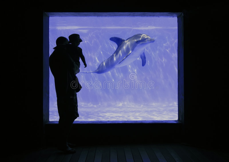 Download Aquarium stock photo. Image of silhouette, child, toddler - 2640702