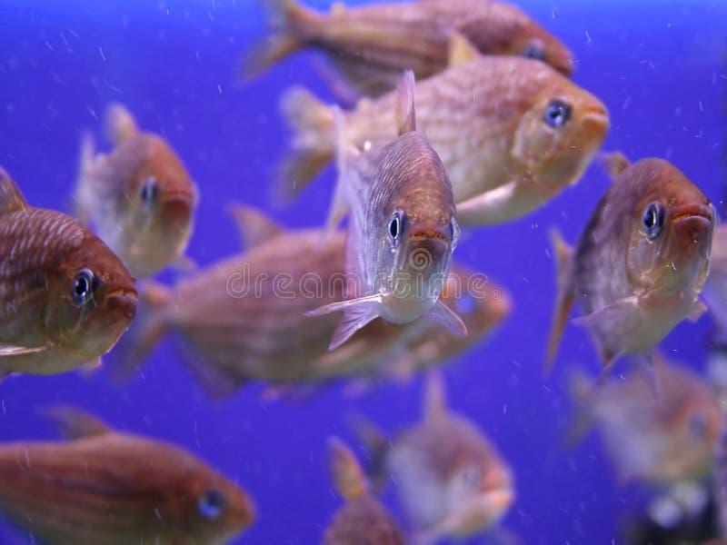 Aquarium. A school of fish in an aquarium