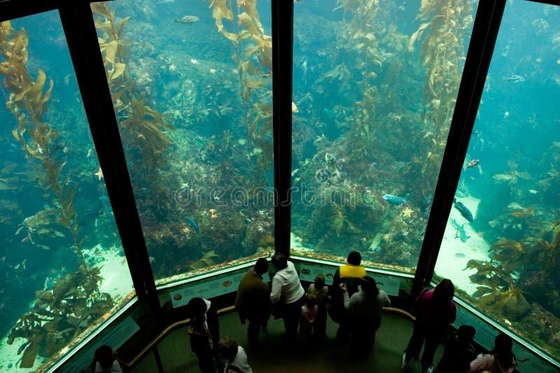 Aquarium 3 royalty-vrije stock afbeeldingen