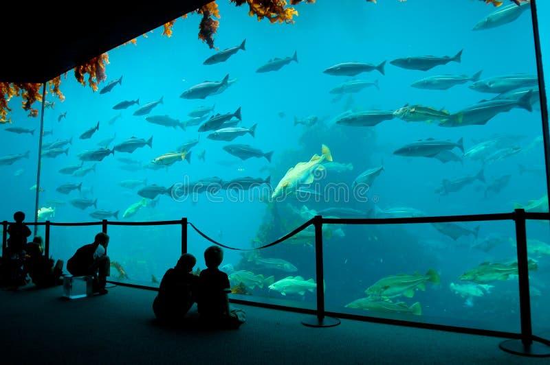 Aquarium royalty-vrije stock foto's
