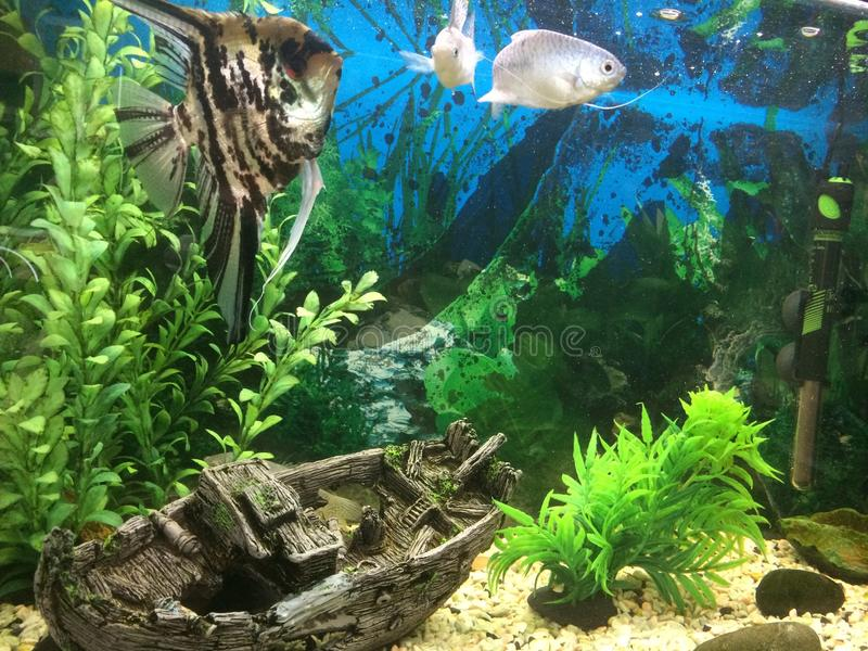 Download Aquarium photo stock. Image du sinked, aquarium, poissons - 45372192